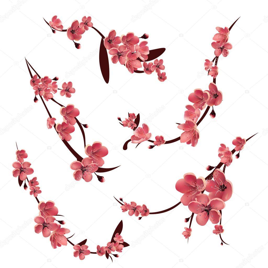 Cerisiers Japonais Dessin - Gamboahinestrosa