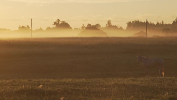 Horse on a foggy pasture during sunrise