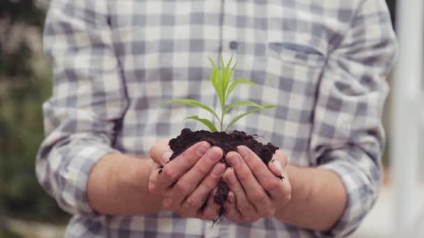 Zelený výhonek v rukou člověka. Péče a růst koncept