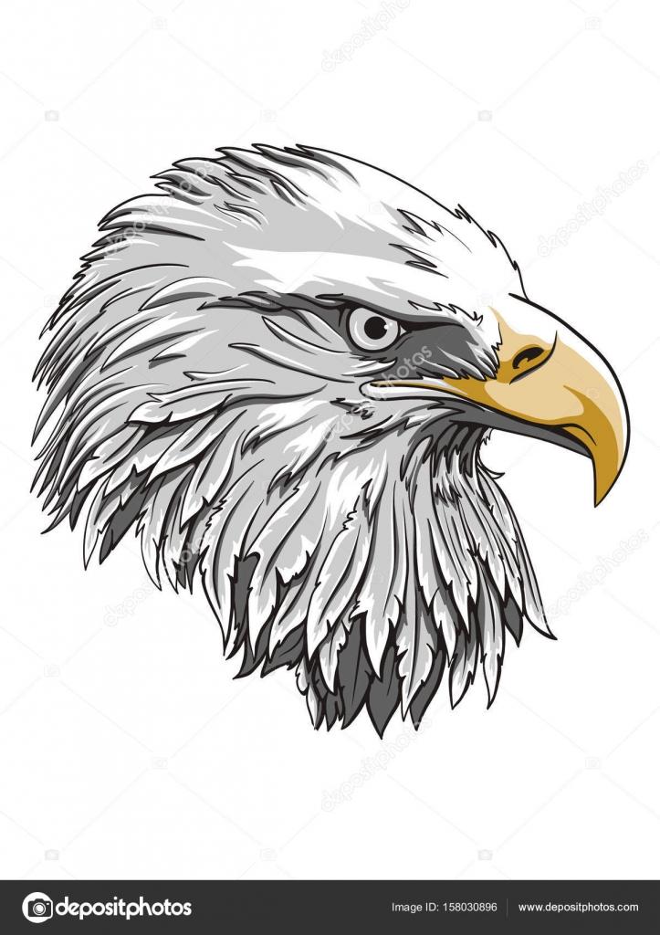 Águila cabeza logo plantilla, gráfica de la mascota del halcón ...