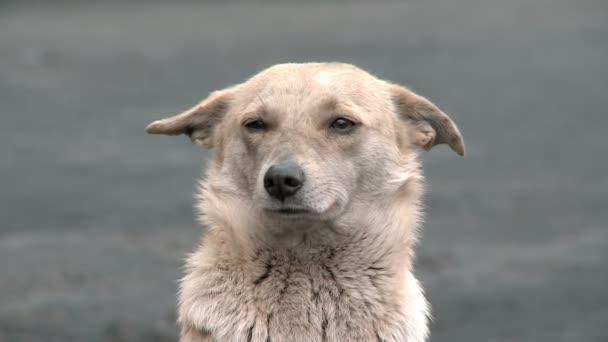 A dog with sad eyes
