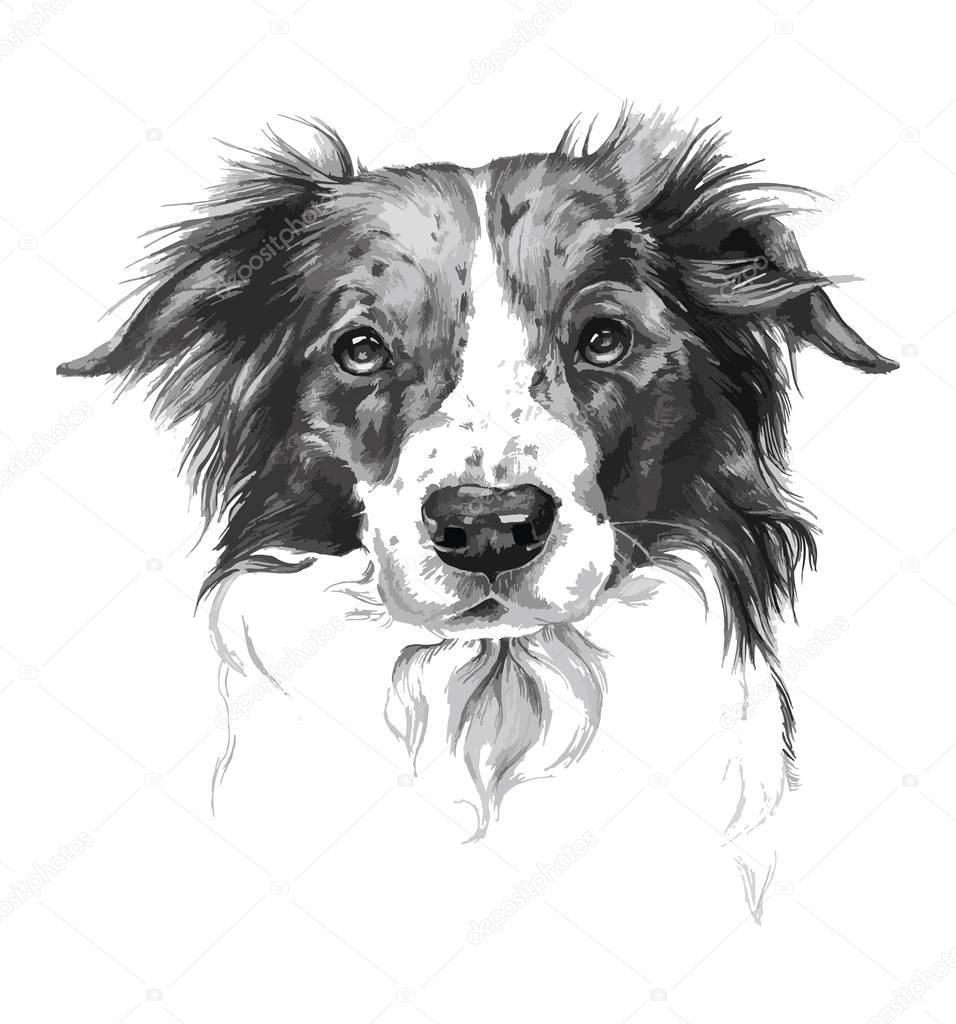 Portrait of dog in black and white art
