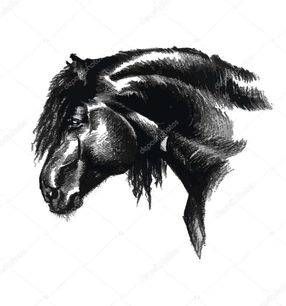Portrait of horse in black and white art drawing