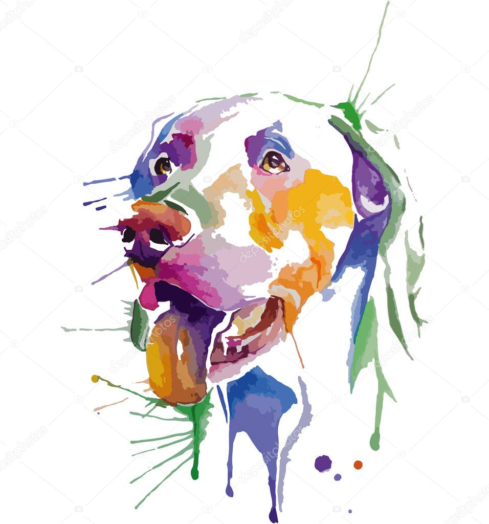 Colored portrait of dog in pop art technique