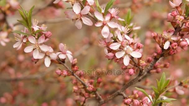 Tavaszi virág háttér. Gyönyörű természeti táj, virágzó fa