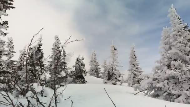 Zimní les v horách proti zamračené obloze