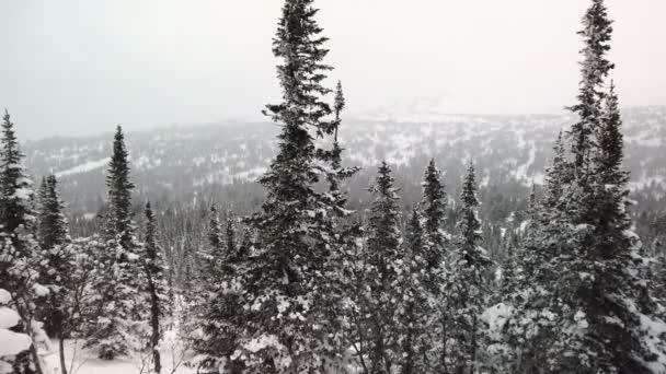 Sněžné hory s jehličnatými listnatými stromy pokrytými sněhem proti zatažené obloze. V zimě oblačno v lyžařském středisku