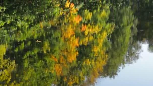 Odraz podzimní stromů v jezeře