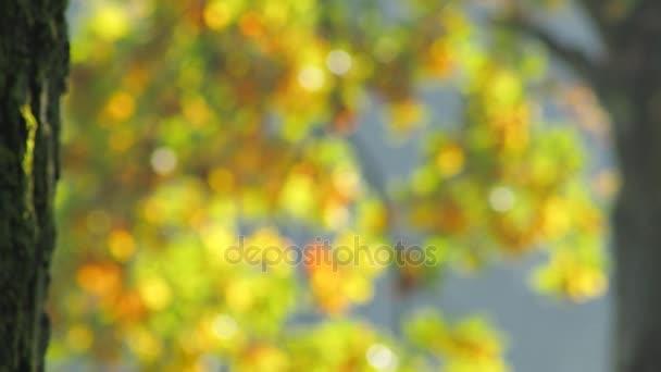 Syté abstraktní pozadí s barevnými listy. Podzim