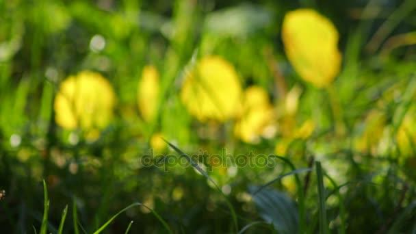 Pozadí abstraktní syté žluté listy a bokeh světla