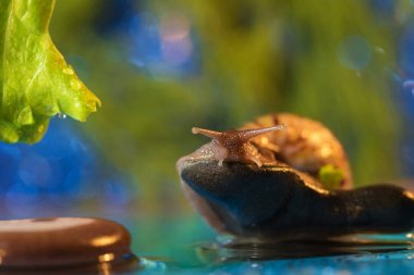 Snail sitting on a rock on the lake