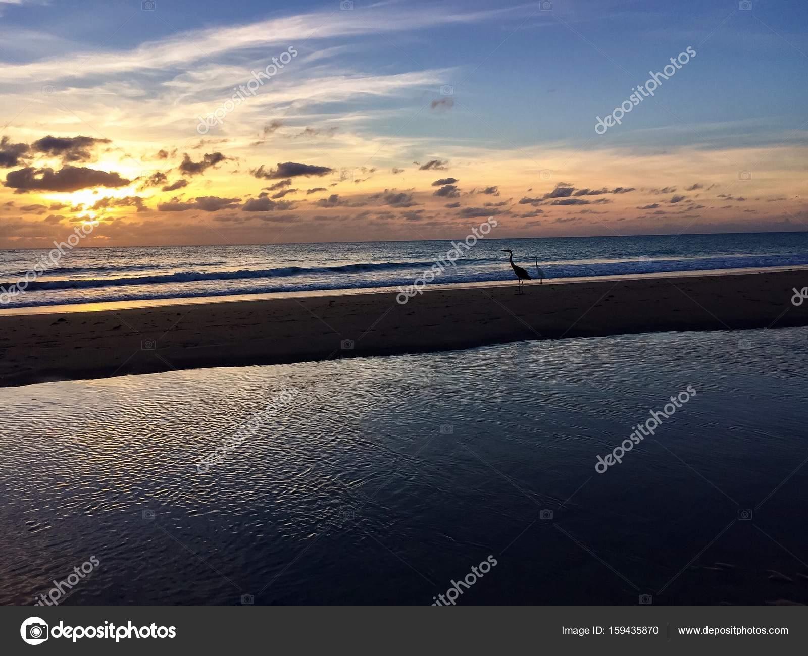 Störche Stehen Auf Den Sand Zwischen Den Ozean Mit Sunrise Florida