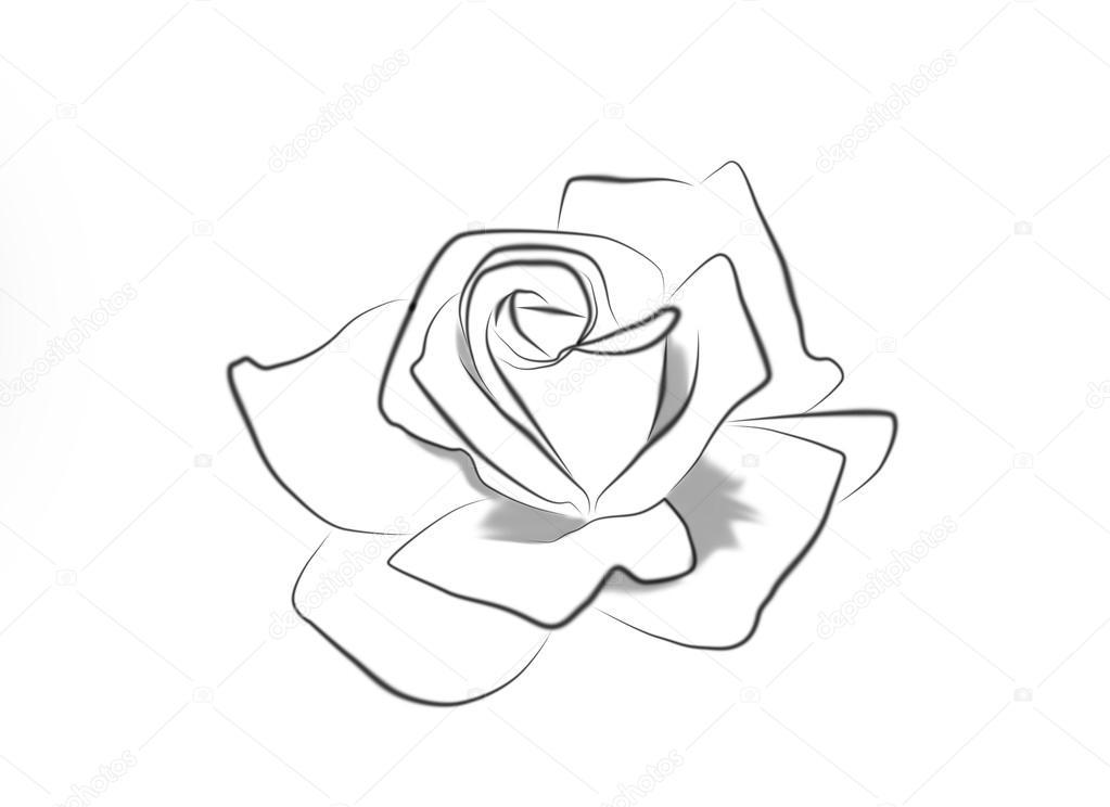 dessin au trait d'une rose — photographie brita.seifert@googlemail