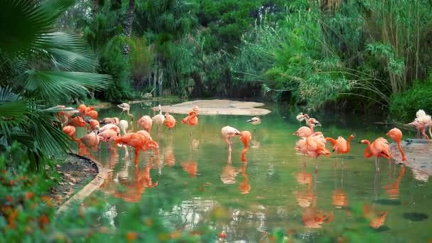 Group of colorful flamingos in the pond