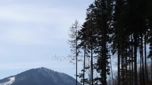 Nagy fa zuhan, fák vágott le, láncfűrészek, eső fa az erdő
