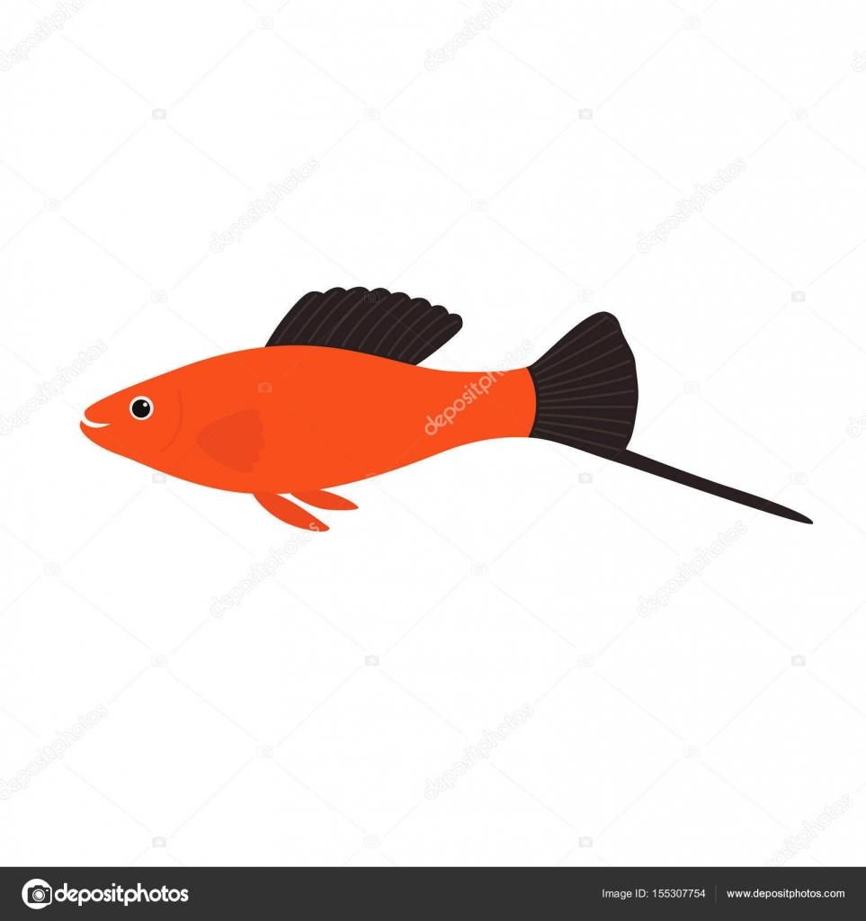 Aquarium fish swordtail, vector illustration — Stock Vector ...