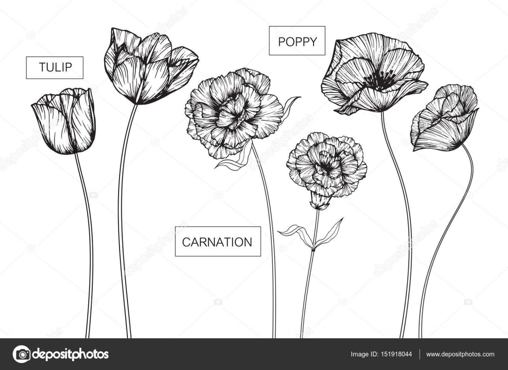 Tulip carnation and poppy flowers drawing and sketch stock vector tulip carnation and poppy flowers drawing and sketch stock vector mightylinksfo Image collections