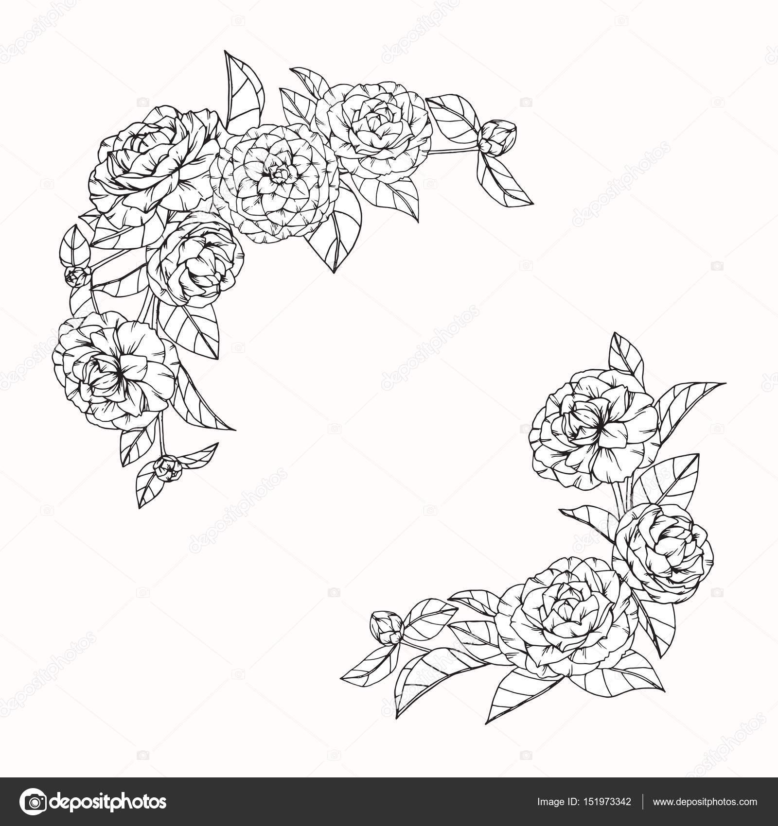 Fleurs De Camelia De Dessin Et D Esquisse Avec Trait Image