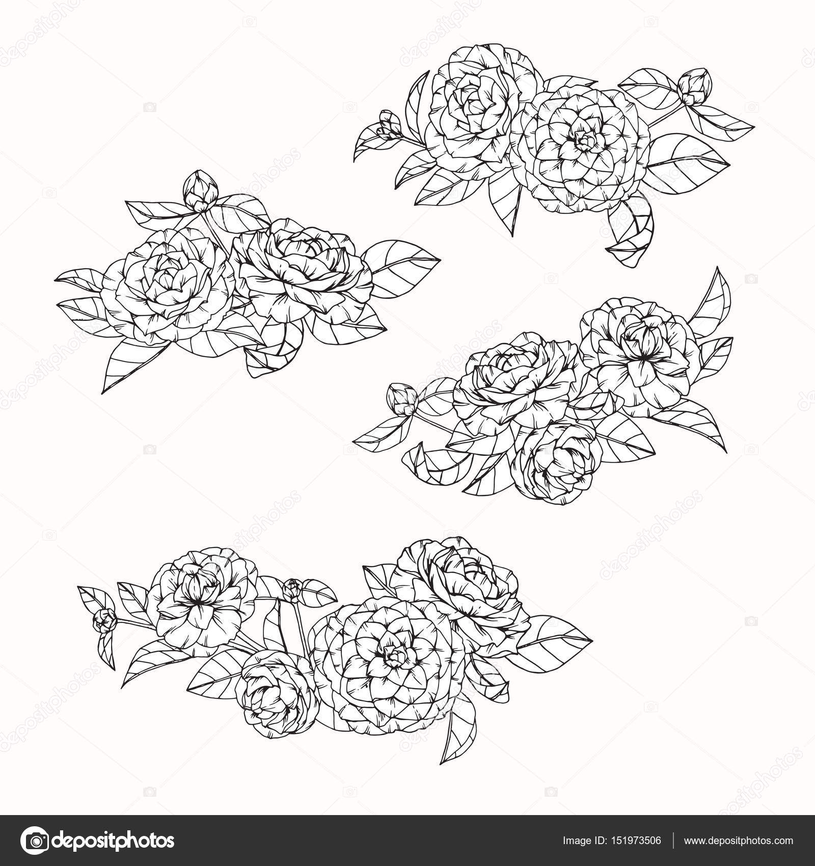 Camellia Flower Line Drawing : Camellia flowers drawing and sketch with line art — stock