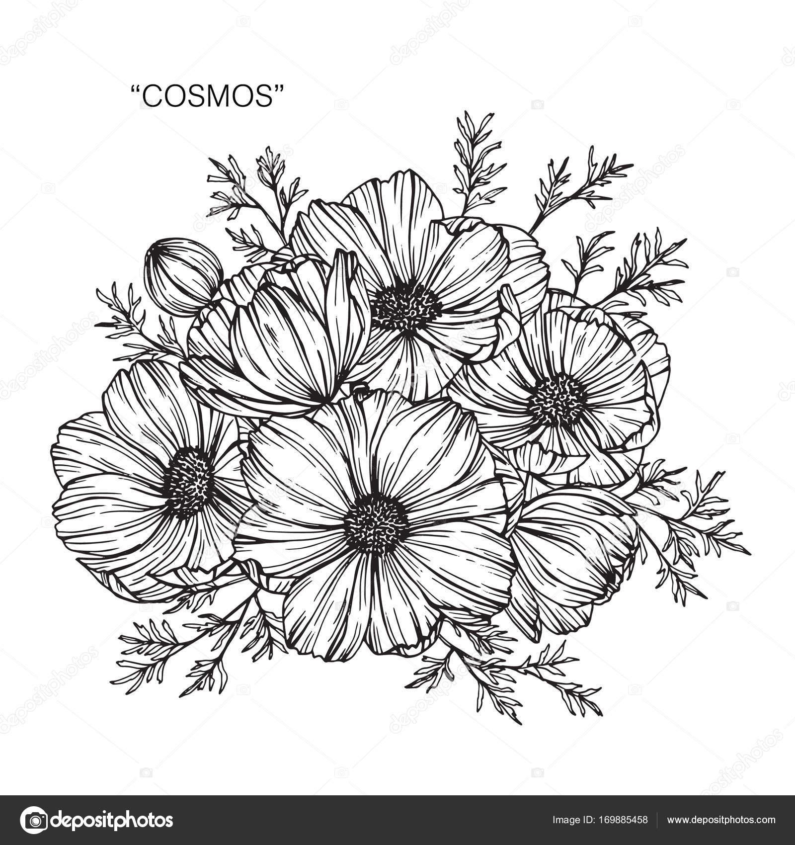 Sketch Com Linha Arte Fundo Branco Flores Desenho