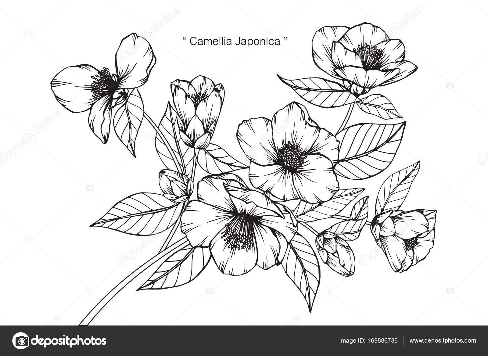 椿日印図面と白い背景の線画でスケッチ ストックベクター Suwi19