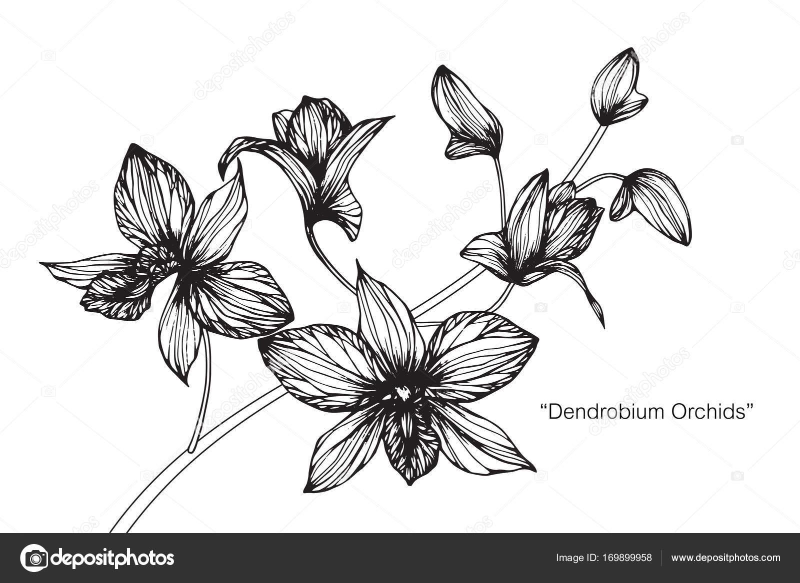 Flor Orquídeas Dibujo Dibujo Con Línea Blanco Negro Arte — Archivo ...