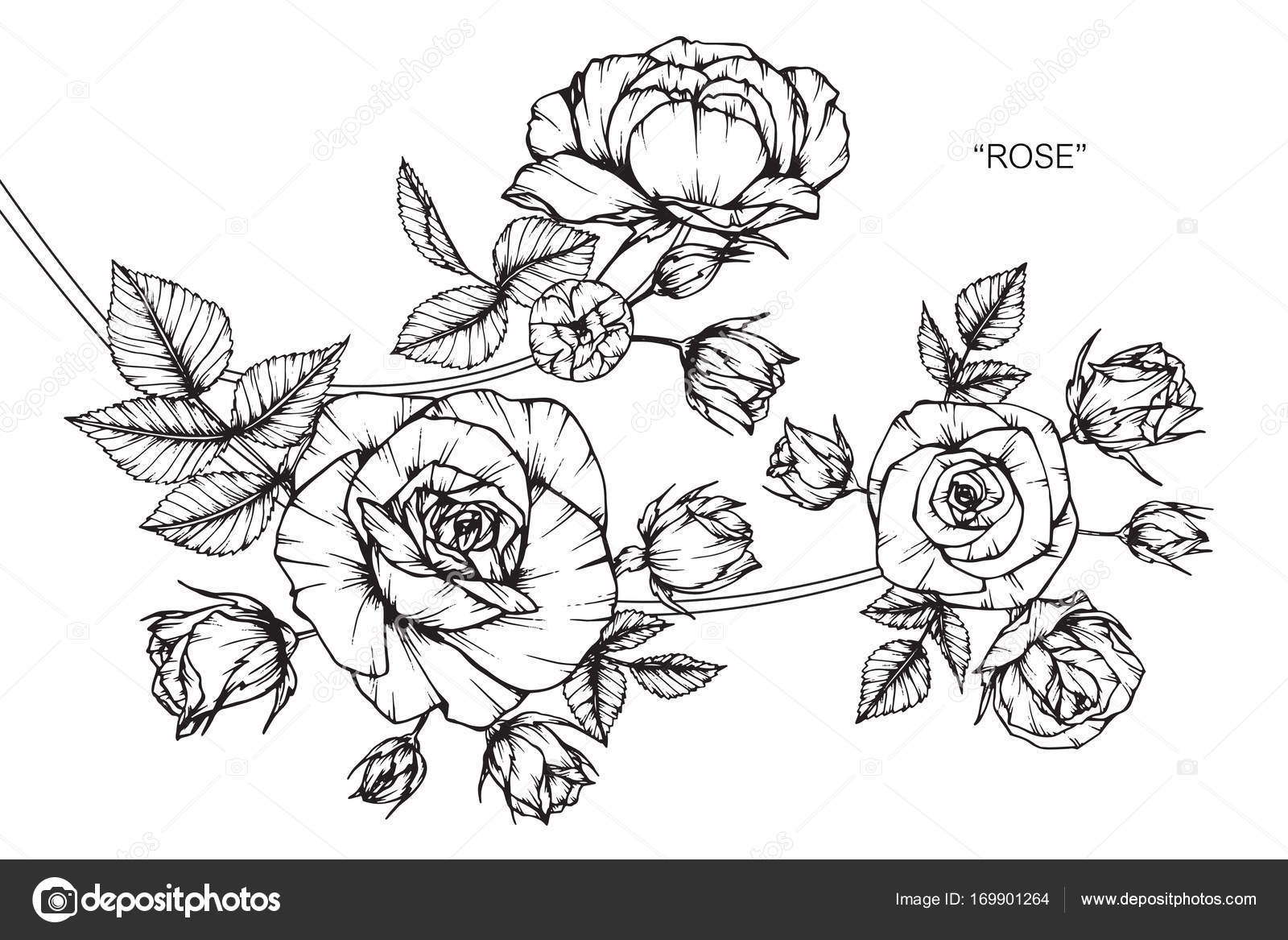 Roses flower drawing sketch black white line art stock vector roses flower drawing sketch black white line art stock vector mightylinksfo Gallery