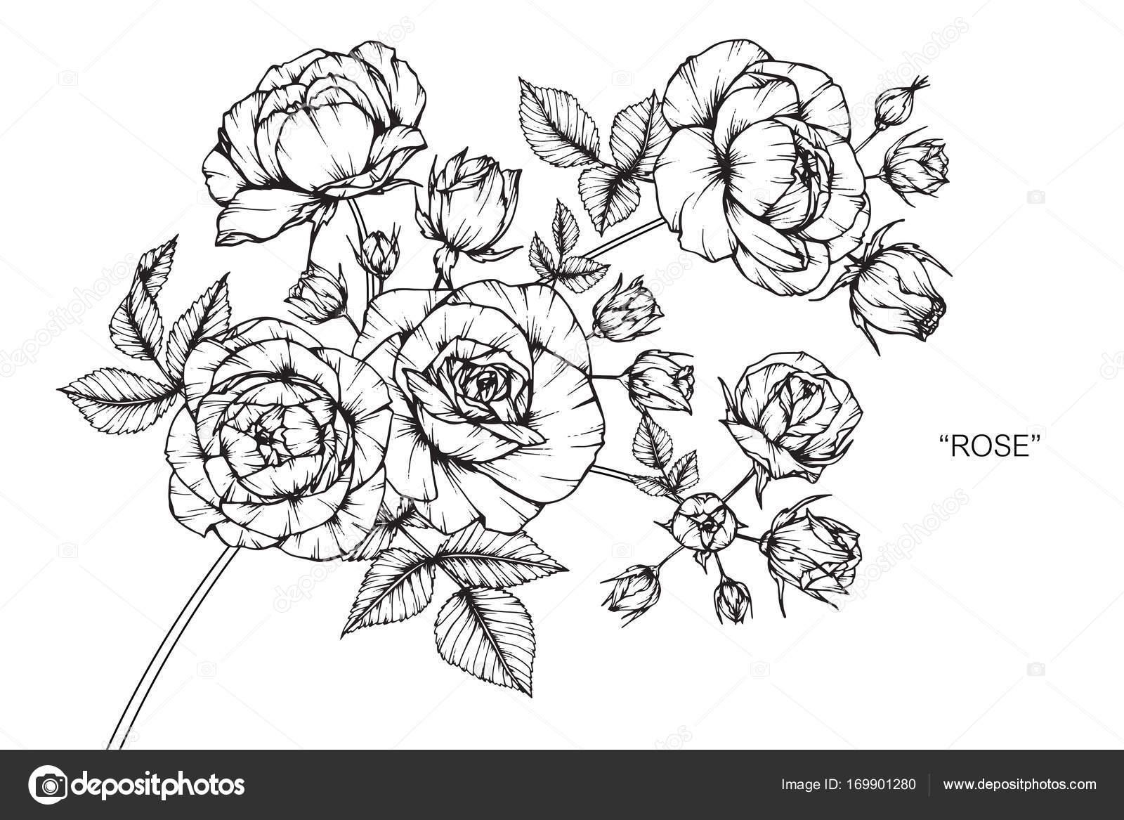Flor Rosas Sketch Com Linha Preta Branca Arte Desenho — Vetor de ...