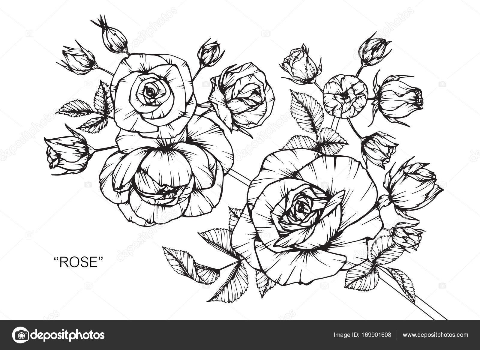 Flor Rosas Dibujo Dibujo Con Línea Blanco Negro Arte