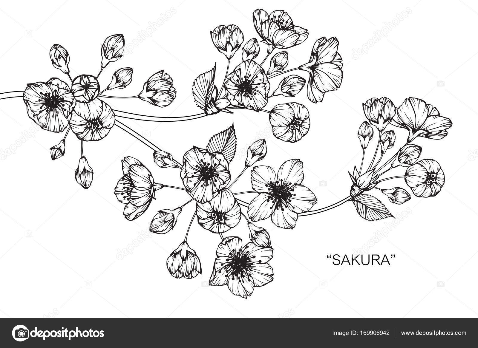 Cherry blossom flower drawing sketch black white line art stock cherry blossom flower drawing sketch black white line art stock vector mightylinksfo