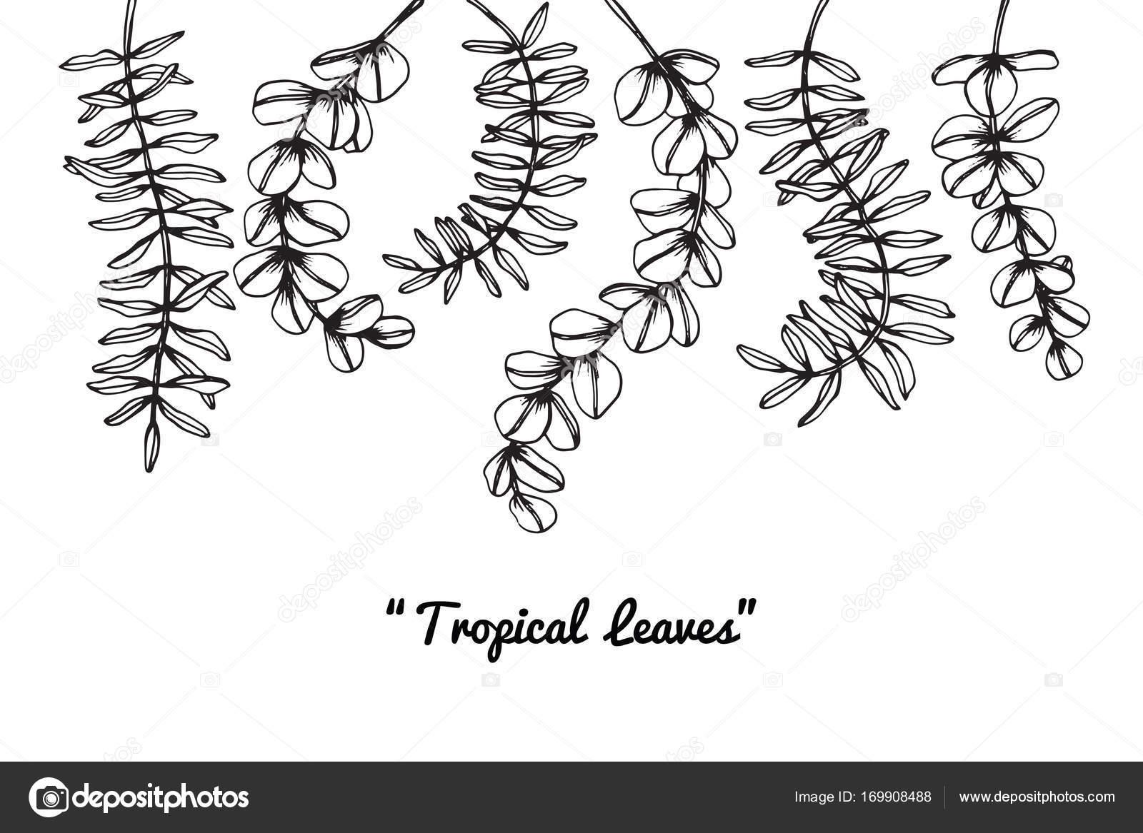 Tropicales Feuilles De Dessin Dessin Et Croquis Avec Trait