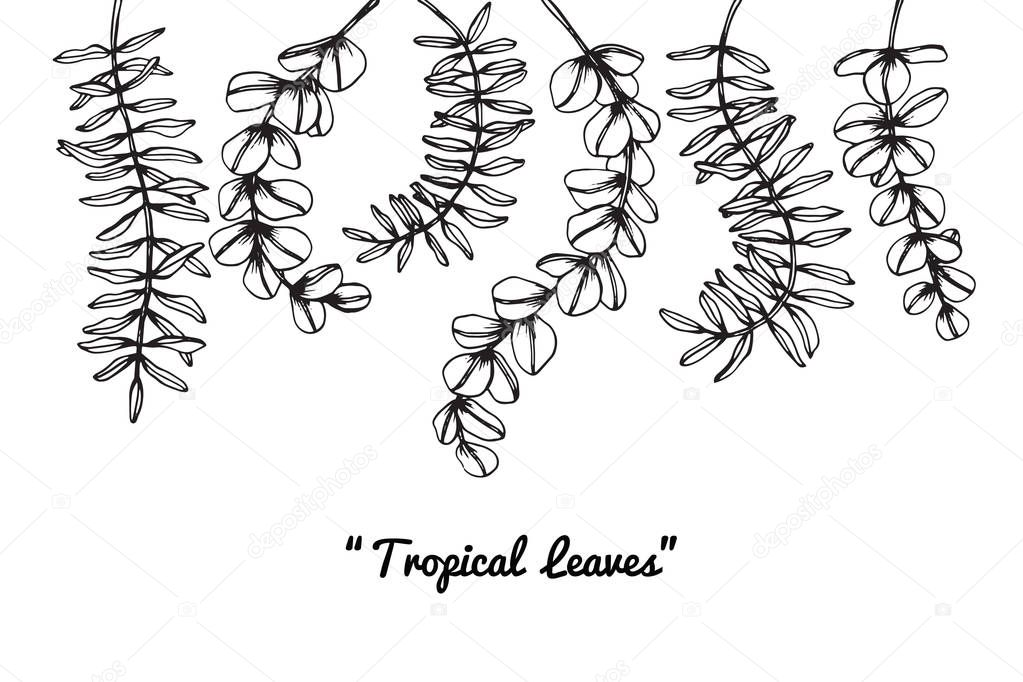 Tropical Leaves Drawing Drawing And Sketch With Black And White Line Art Premium Vector In Adobe Illustrator Ai Ai Format Encapsulated Postscript Eps Eps Format We got our inspiration from a monstera leaf. wdrfree