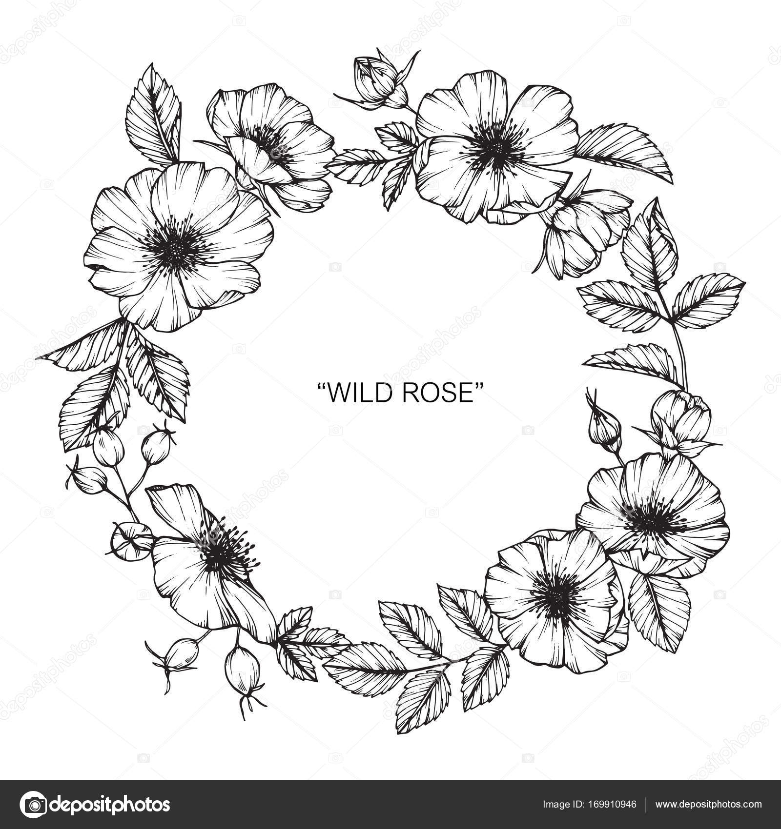 Wild Rose Flower Frame Drawing Drawing And Sketch With Black And