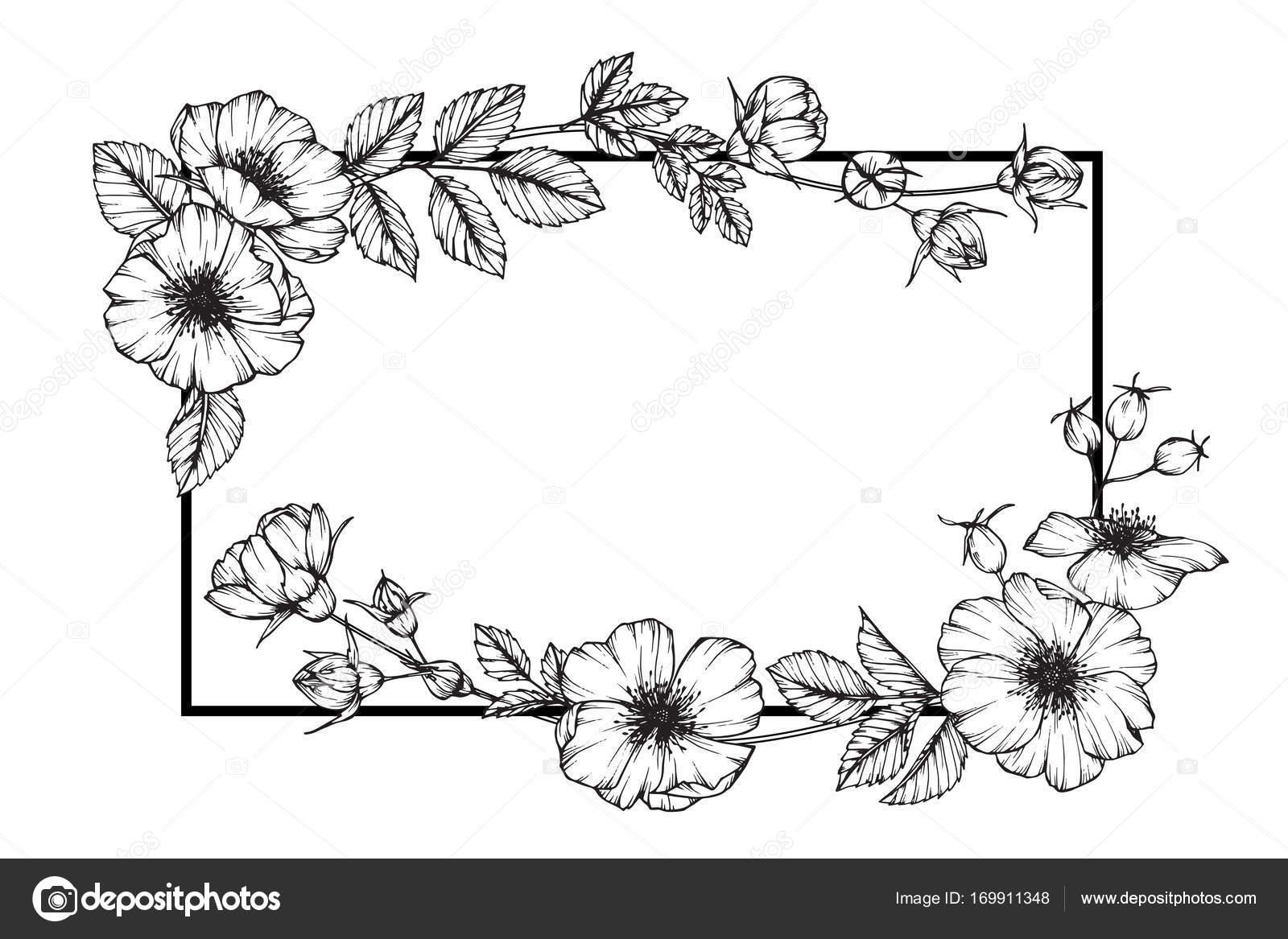 Cornici Disegno Bianco E Nero.Cornice Fiore Di Rosa Selvaggio Disegno Disegno E Schizzo