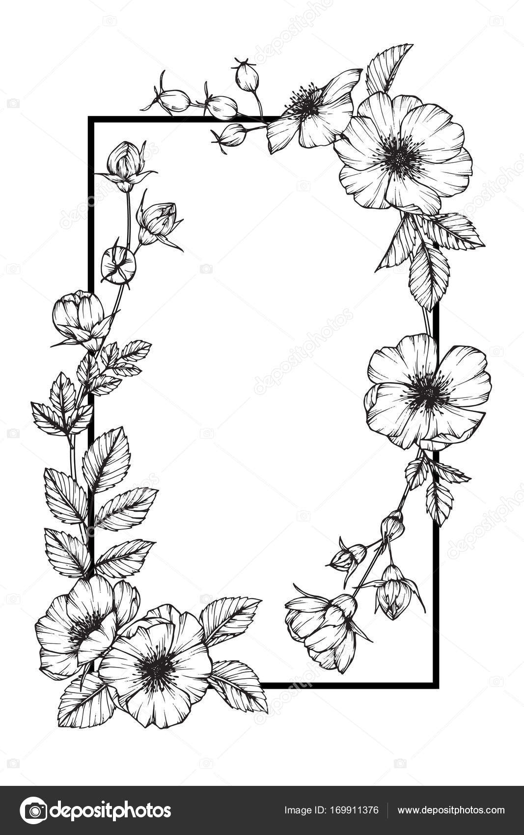 Flower Frame Line Drawing : Wild rose flower frame drawing and sketch with