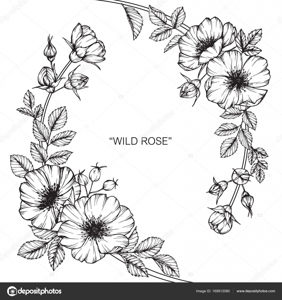 Rose Line Art Flower Design : Wild rose flower drawing and sketch with black white