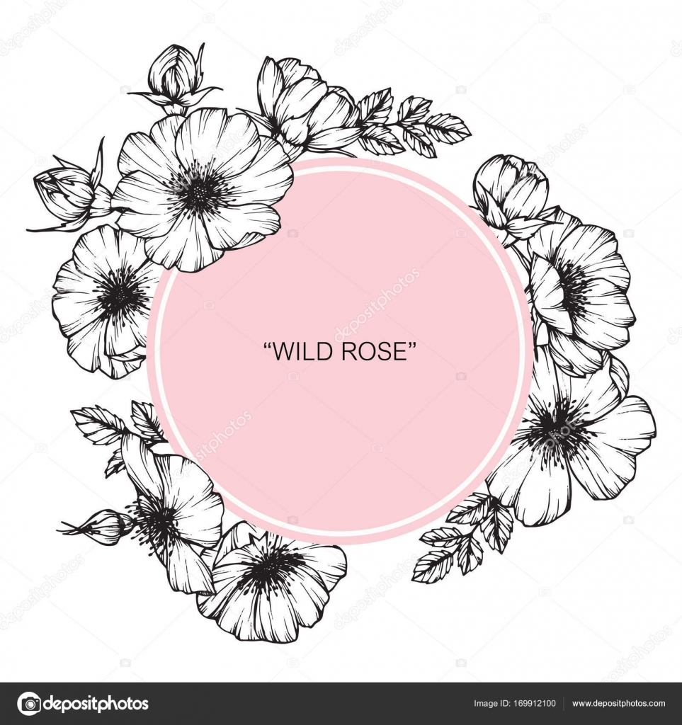 Wild Rose Flower Frame Drawing And Sketch With Black White Line Art
