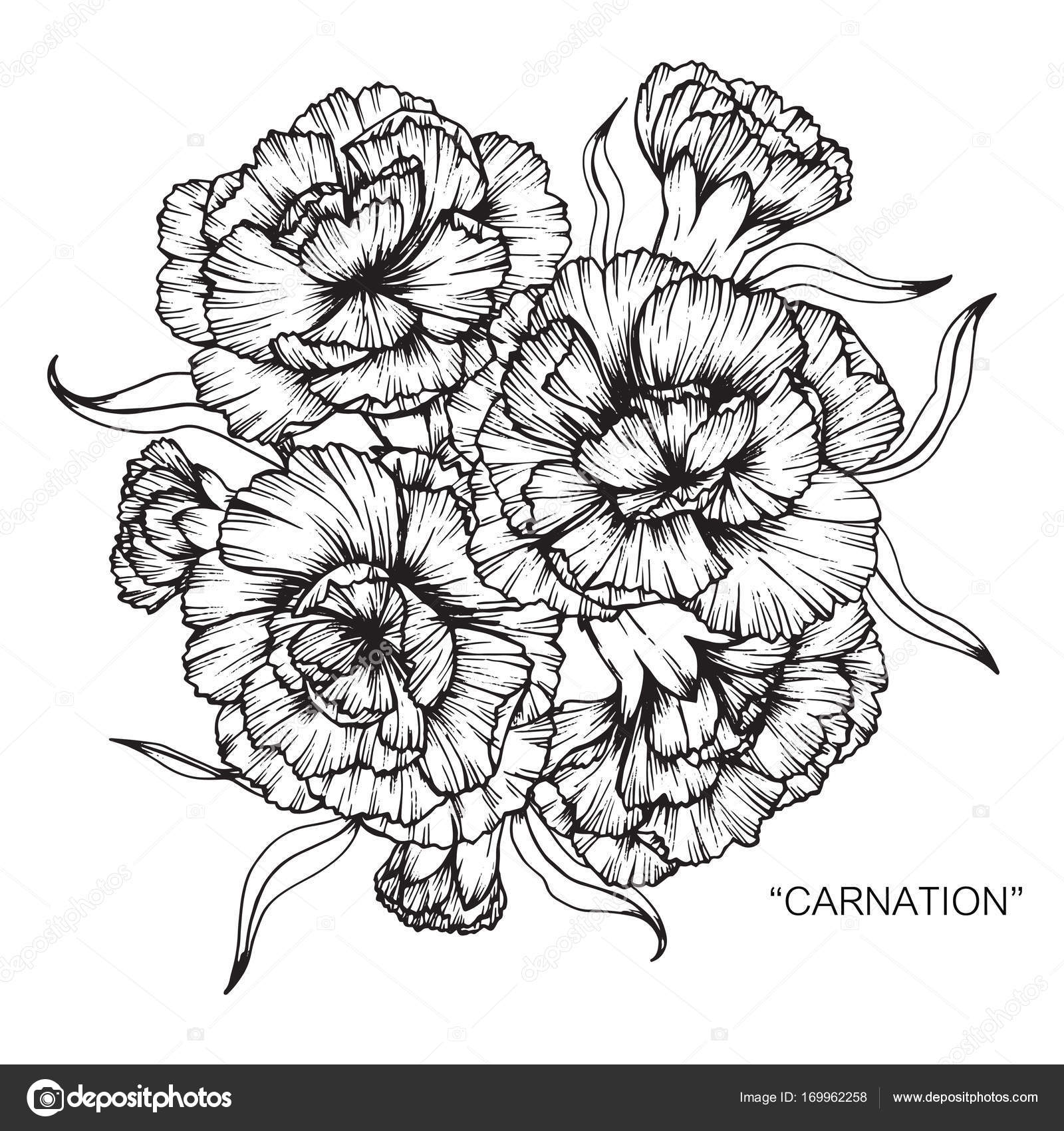 Bouquet of carnation flowers drawing stock vector suwi19 169962258 bouquet of carnation flowers drawing stock vector izmirmasajfo