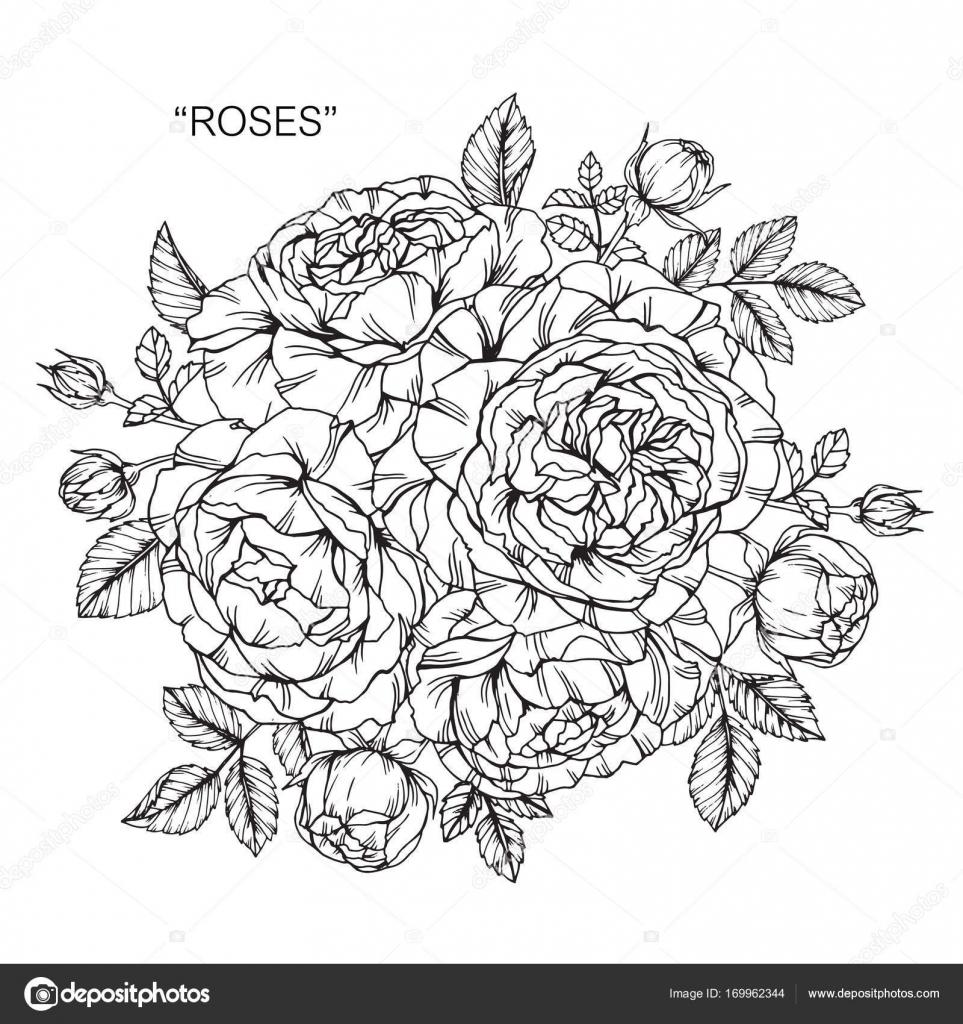 blumenstrau rosen zeichnen stockvektor suwi19 169962344. Black Bedroom Furniture Sets. Home Design Ideas