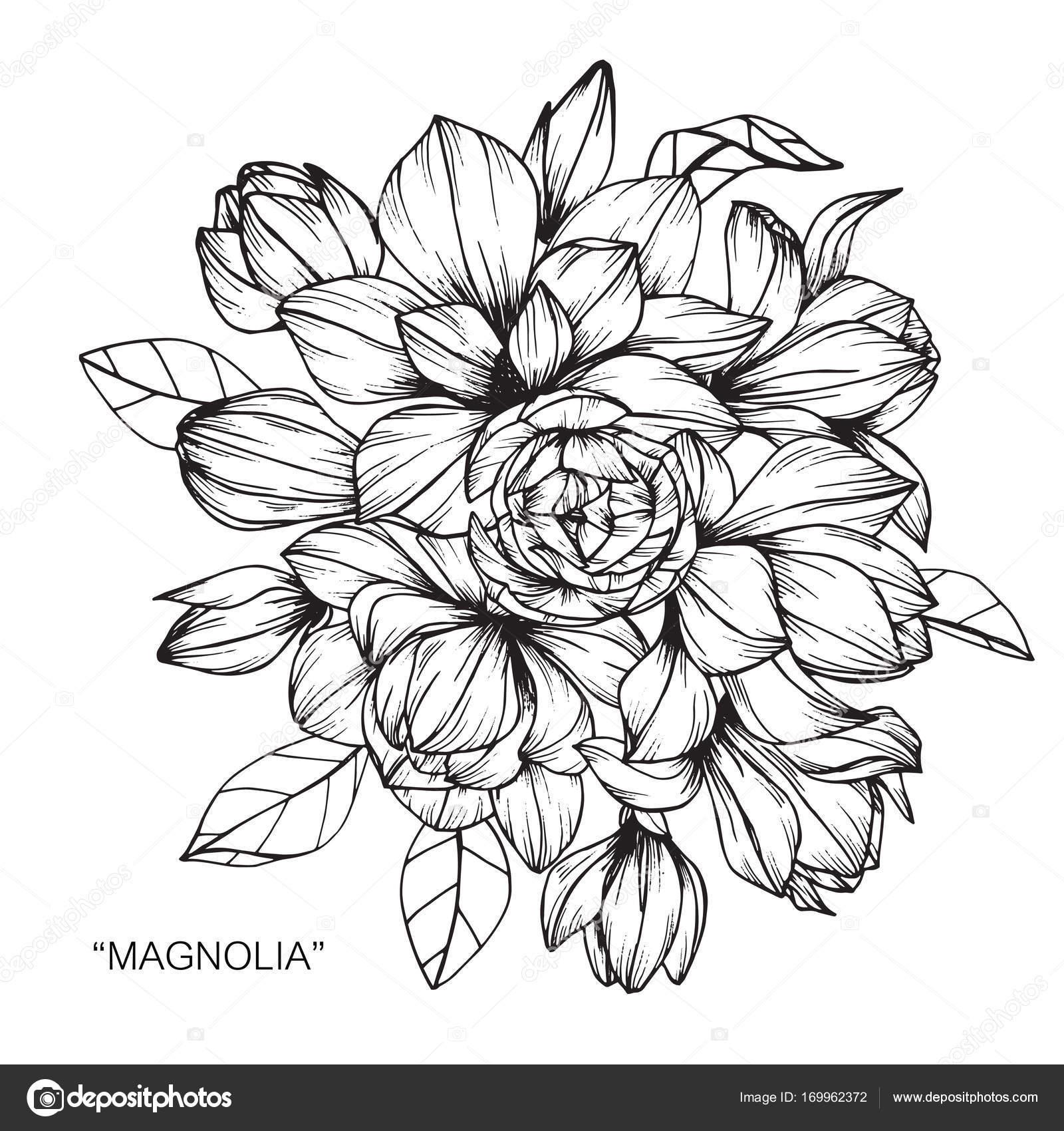 Bouquet of magnolia flowers drawing stock vector suwi19 169962372 bouquet of magnolia flowers drawing stock vector izmirmasajfo