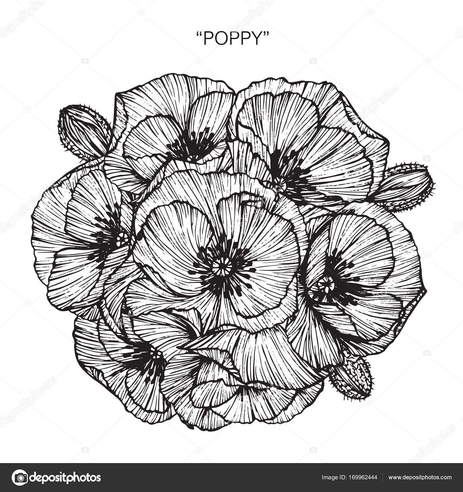 Bouquet of poppy flowers drawing stock vector suwi19 169962444 bouquet of poppy flowers drawing stock vector izmirmasajfo