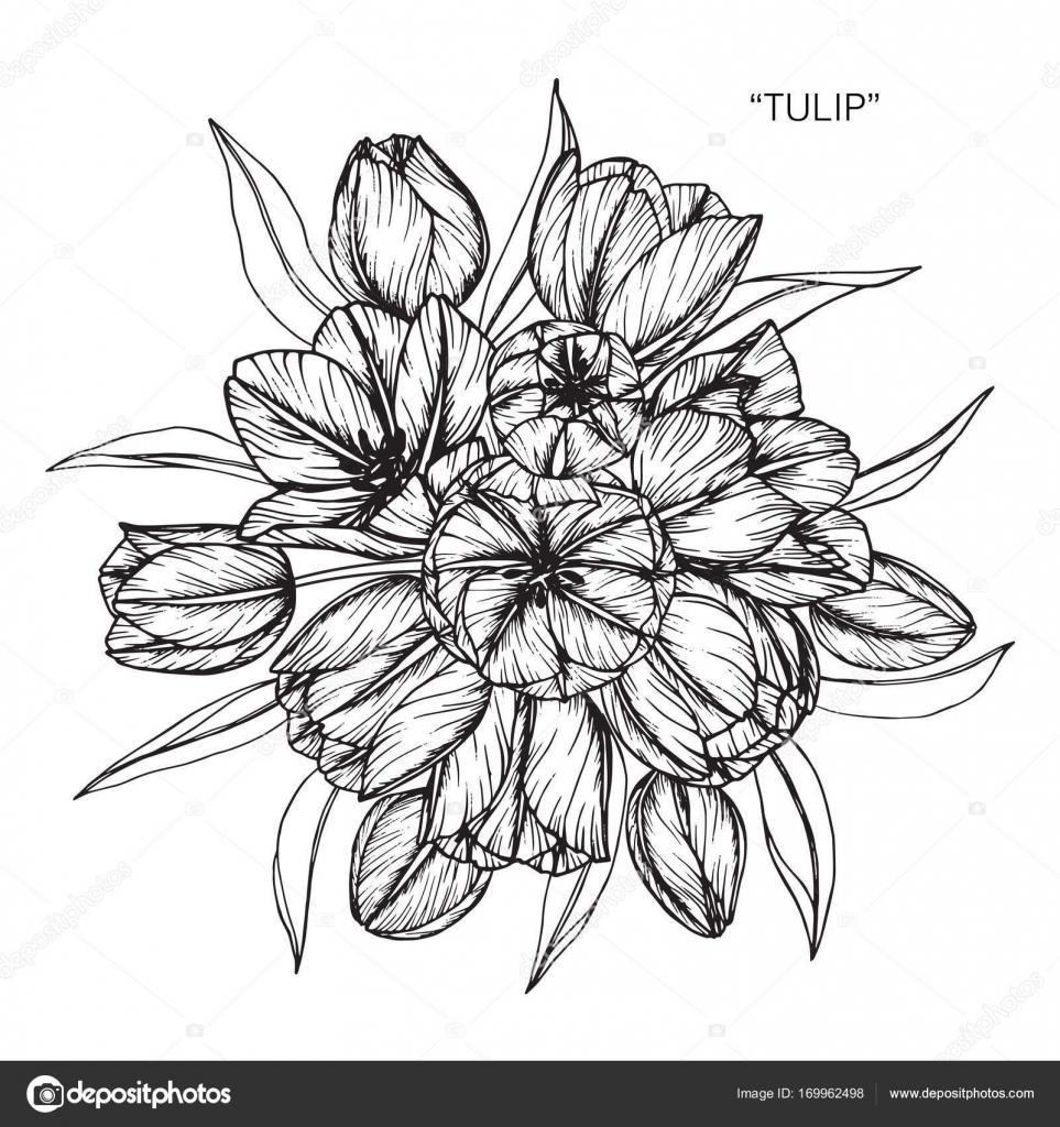 Bouquet of tulip flowers drawing stock vector suwi19 169962498 bouquet of tulip flowers drawing stock vector izmirmasajfo