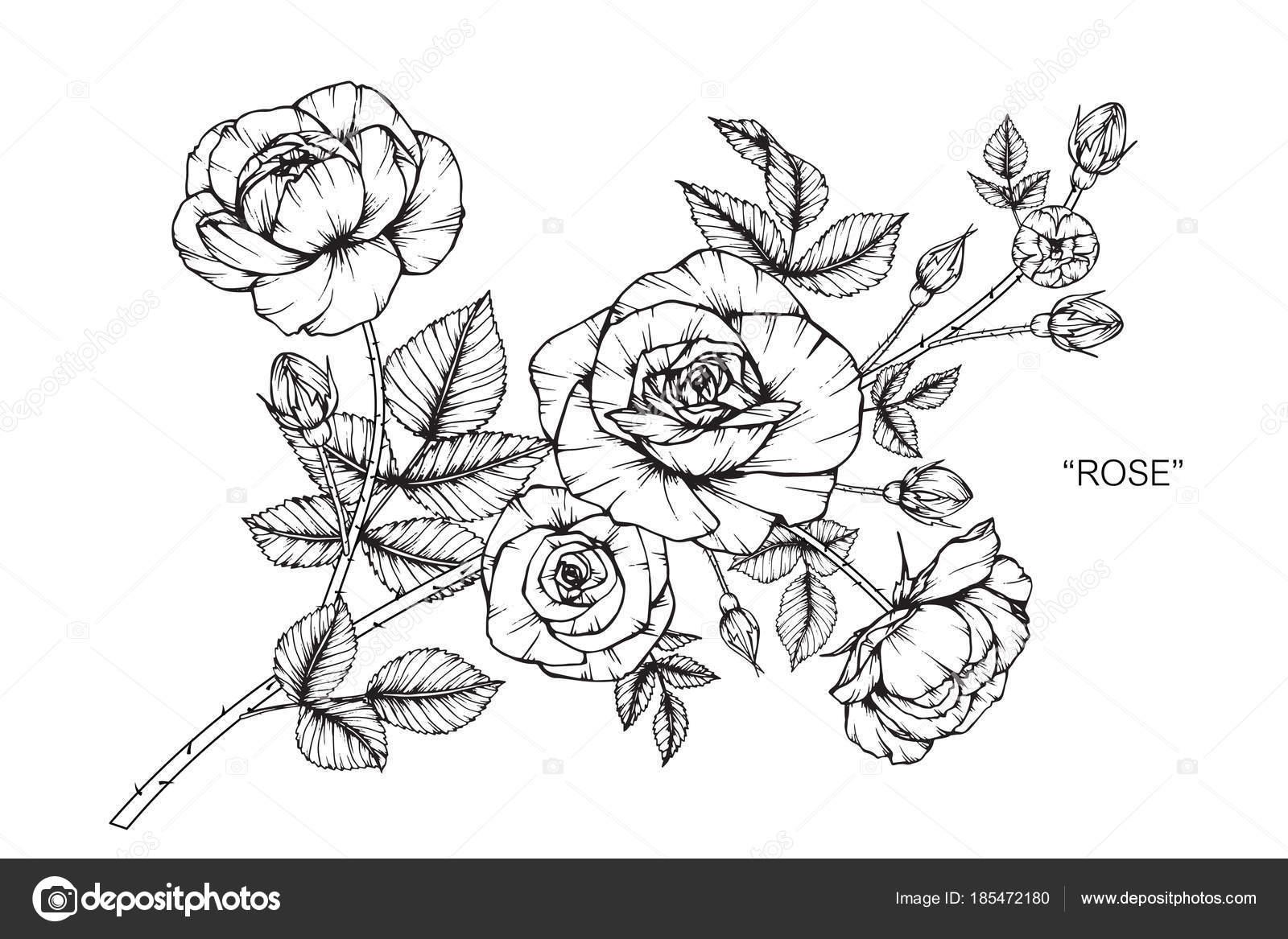 Rose Fleur Dessin Illustration Noir Blanc Avec Dessins Trait Sur