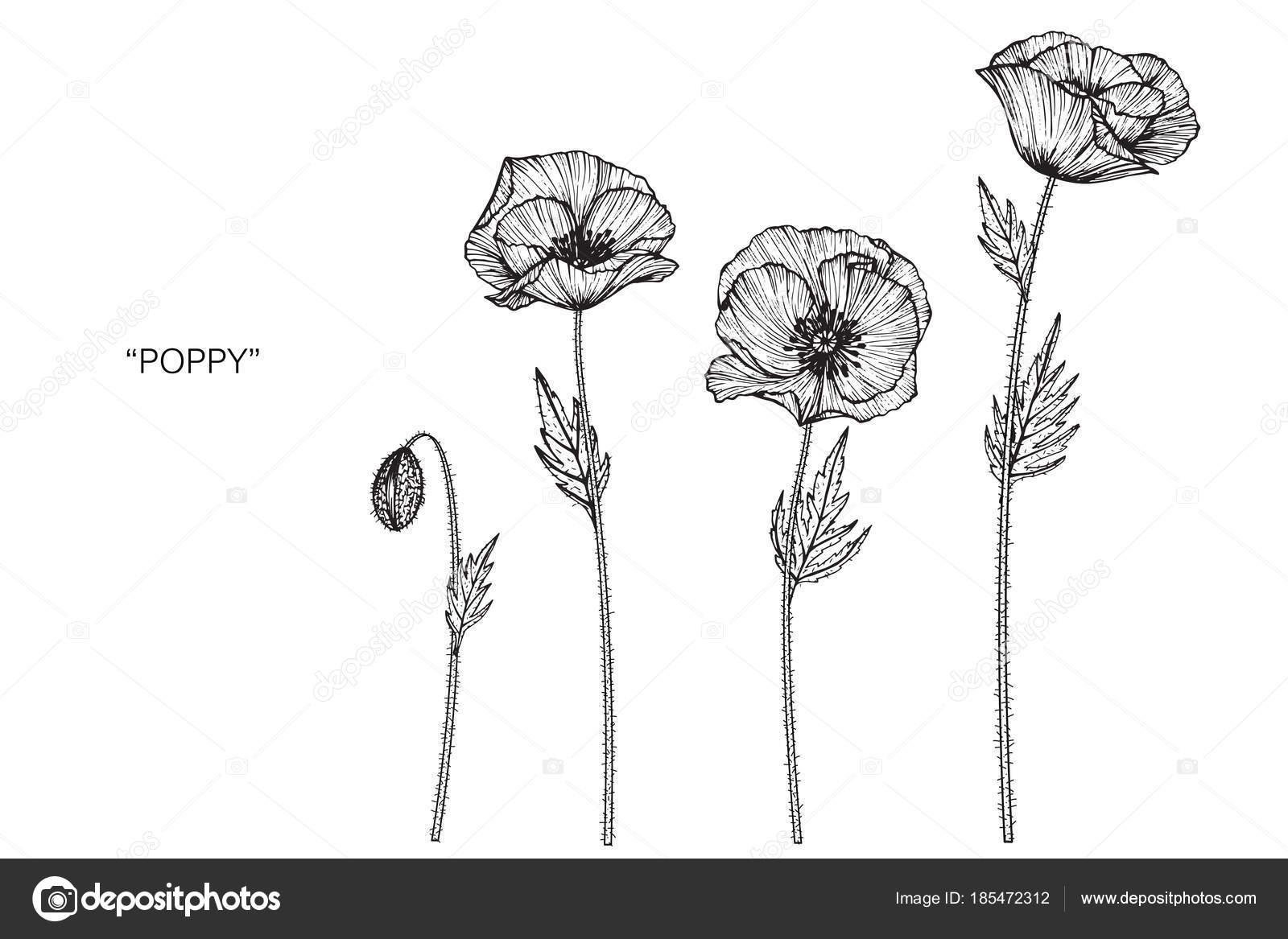 Illustration Dessin Fleur Pavot Noir Blanc Avec Dessins