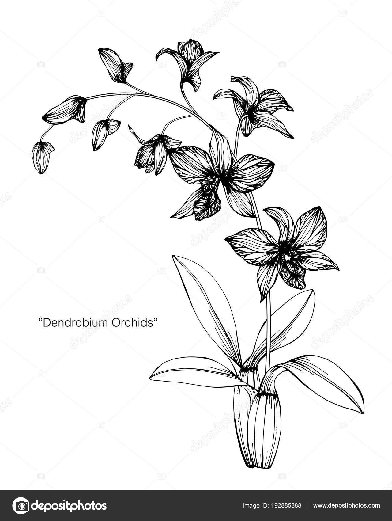 Fleur Orchidée Dessin Illustration Noir Blanc Avec Dessins