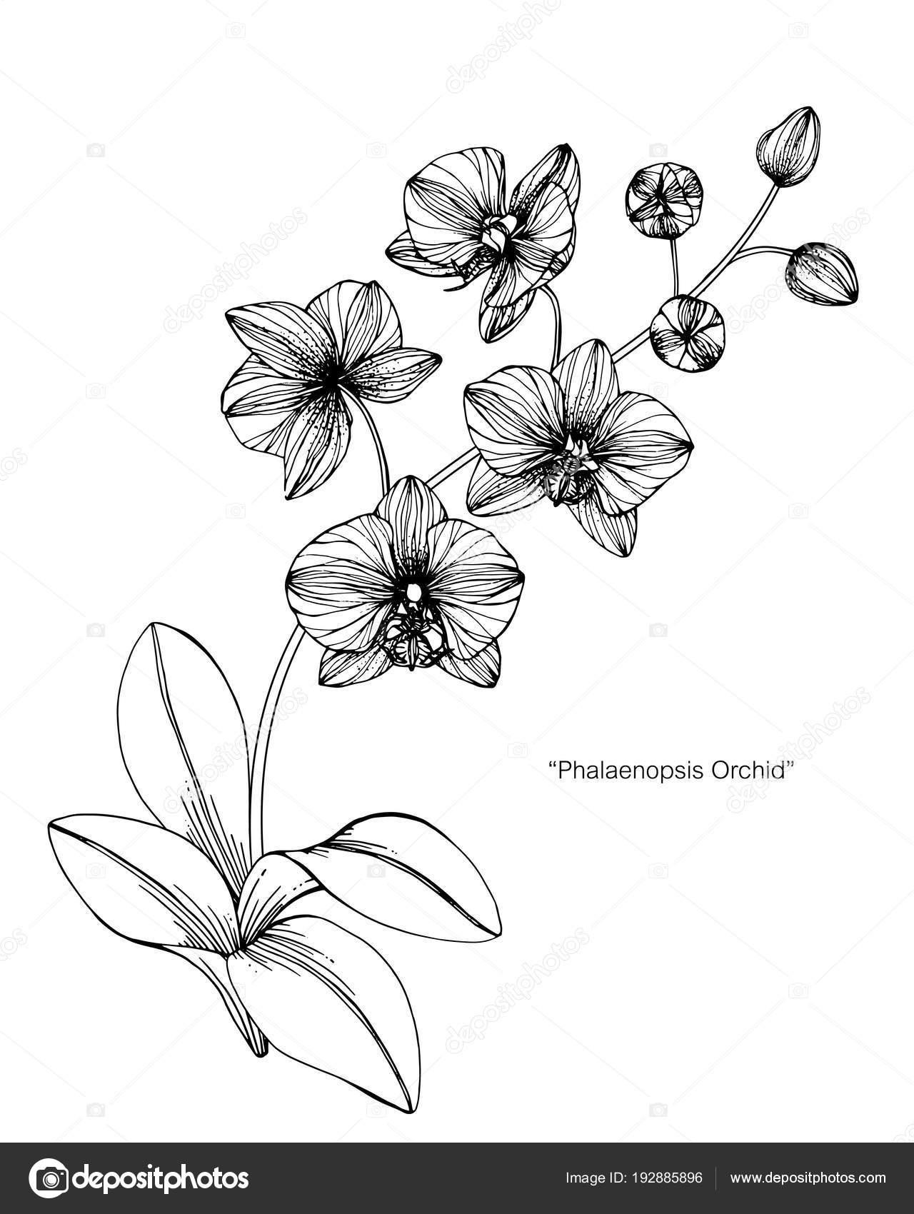 Flor Orquídea Desenho Ilustração Preto Branco Com Arte Linha