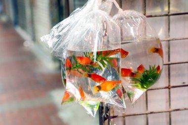 Tropical Aquarium fish and plat at Hong Kong goldfish market