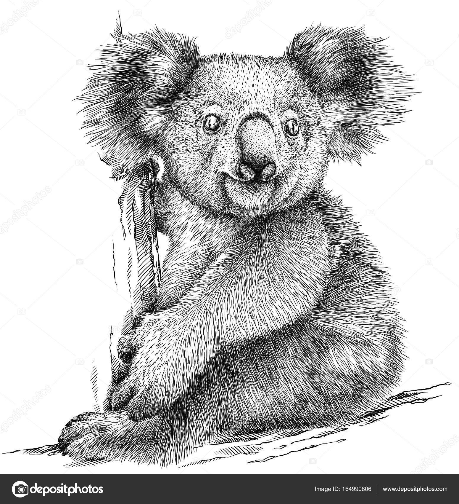 Noir et blanc graver illustration isolée de koala photo