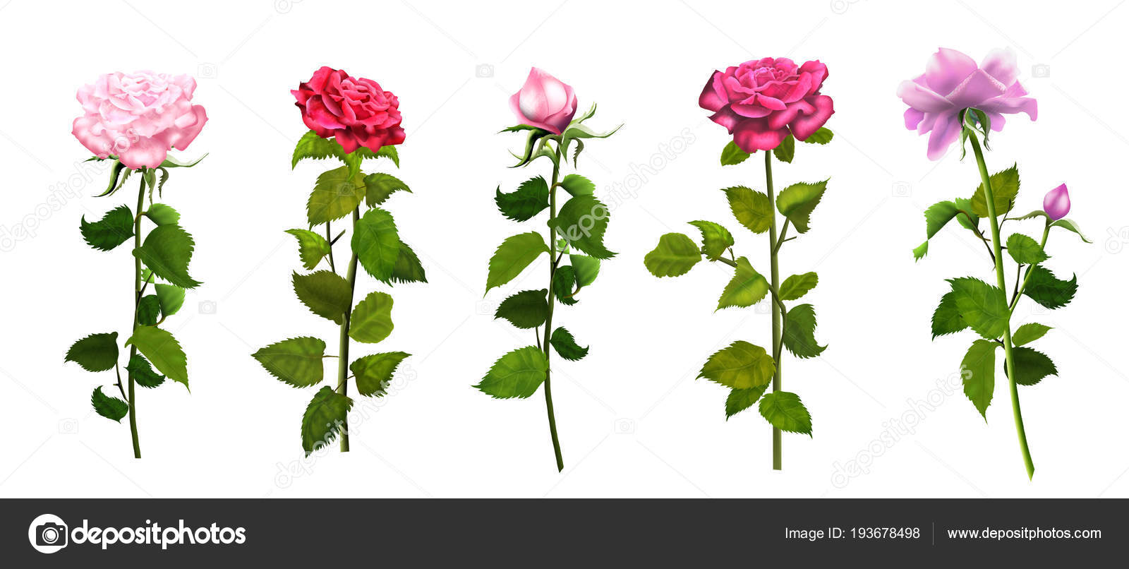 Roses Isolated On White Background Set Romance Wallpaper Pink And Red Banner With Copy Space For Wishes Text Wedding Day Womens Valentines