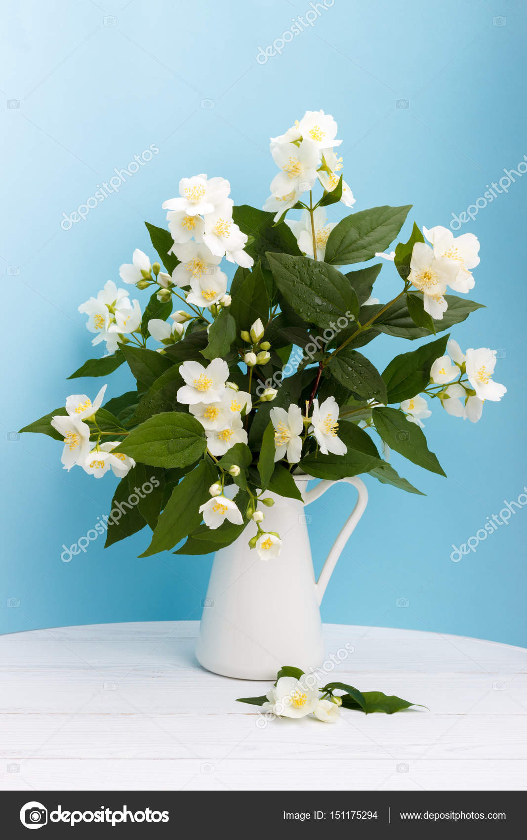 Fresh jasmine flowers in a vase stock photo lanam 151175294 fresh jasmine flowers in a vase stock photo izmirmasajfo Image collections